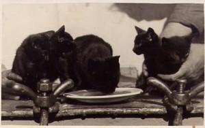 Minnie & Kittens