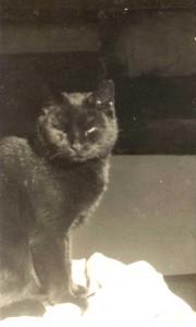 Minnie - the ship's Cat
